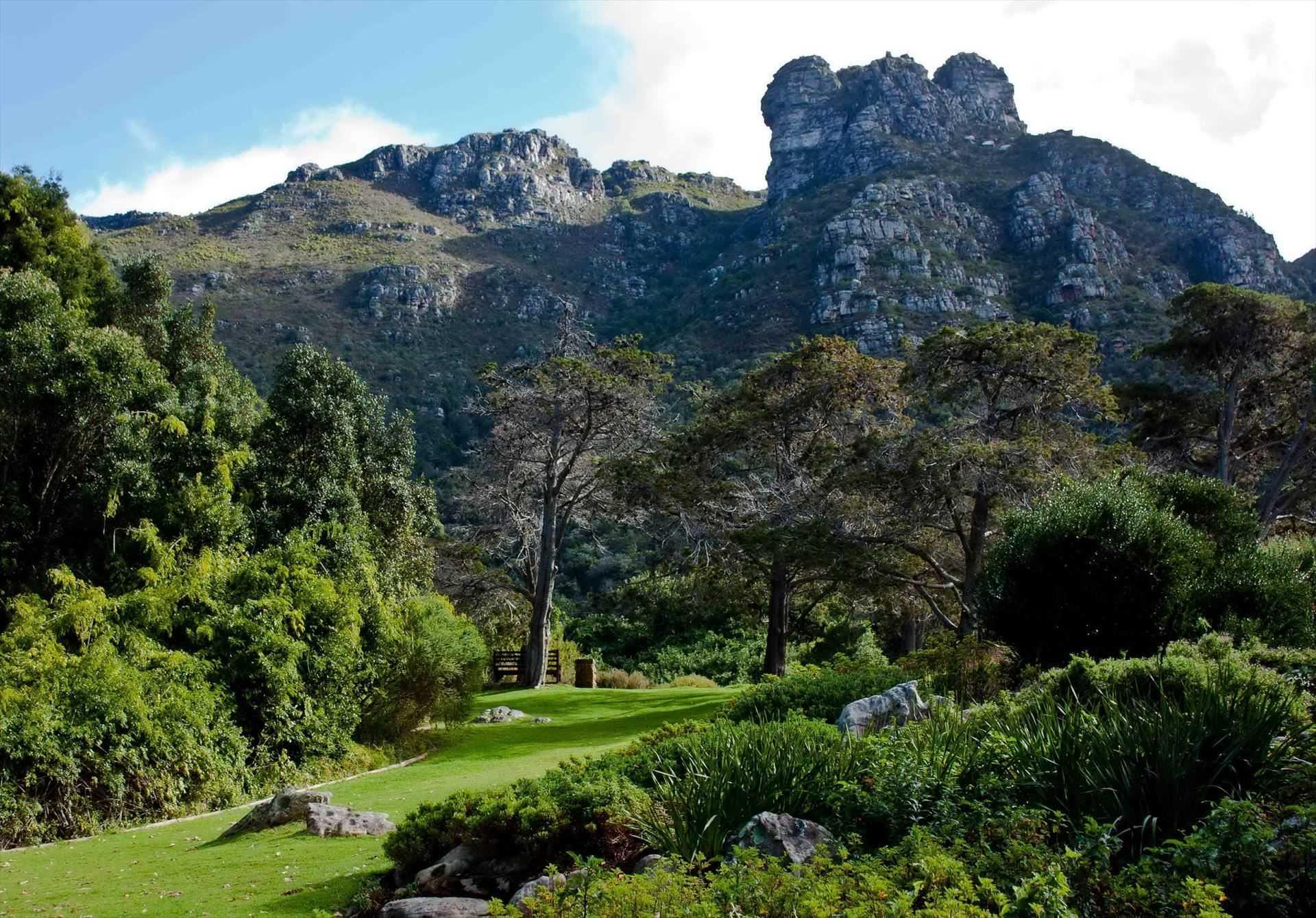 ЮАР приглашает прогуляться над кронами деревьев